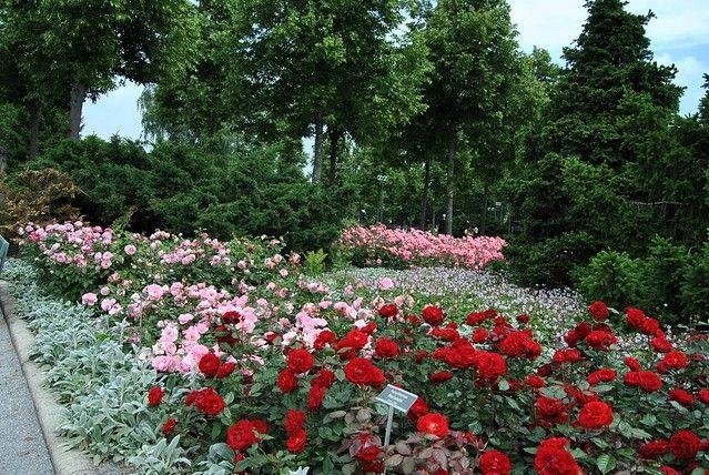 El Jardín de las rosas Rosengarten