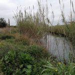 Parque fluvial del Túria