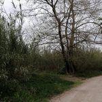 parque fluvial del túria infosvalencia