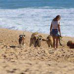 playa-para-perros-infosvalencia