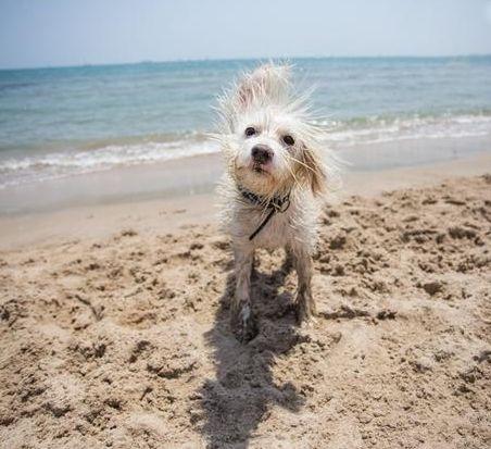 playa-para-perros-infosvalencia-2021